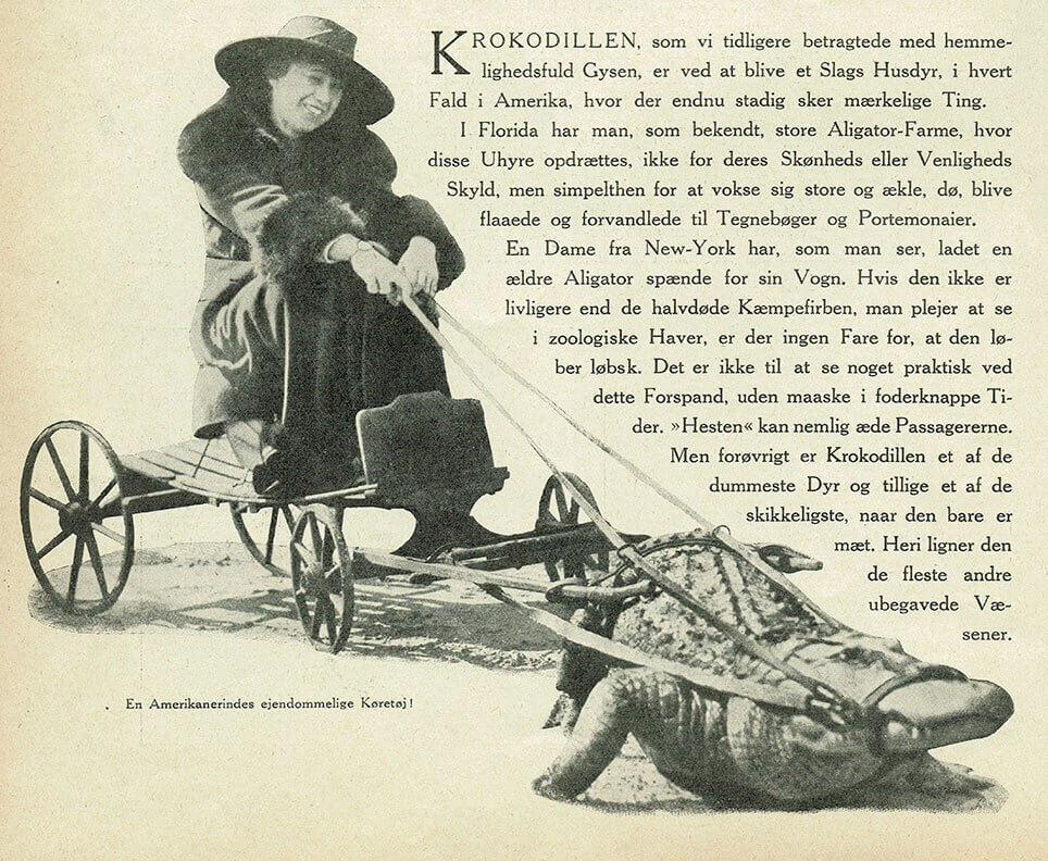 Alligator spændt for vogn