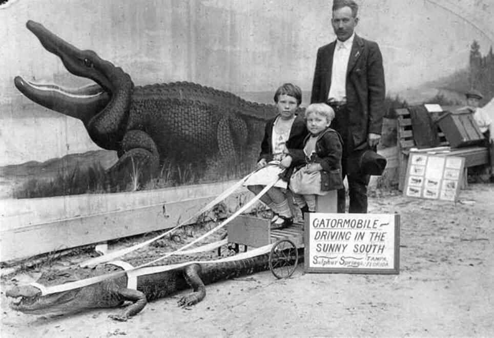 Kørsel med alligator